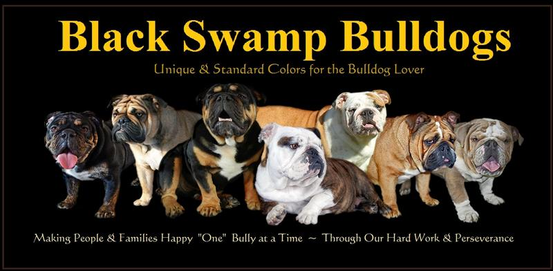 Unique Standard Colors For The Bulldog Lover Reputable